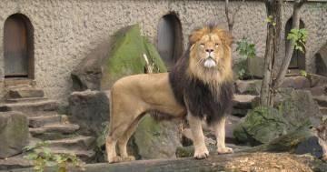 Organizzano una raccolta fondi per comprare uno zoo e trasformarlo in un centro di riabilitazione per animali