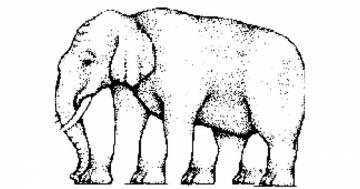 Quante gambe ha l'elefante? Questa illusione ottica vi stupirà