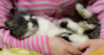 Avere un gatto aiuta a combattere lo stress: lo dice la scienza