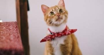 'Come spiego alla mia gatta che ci siamo lasciati?' La domanda diventa virale su Twitter