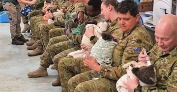I militari si prendono cura dei koala in Australia: queste foto sono toccanti