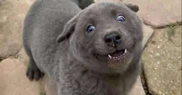 È un cane o un gatto? Le foto di questo cucciolo hanno fatto il giro del mondo