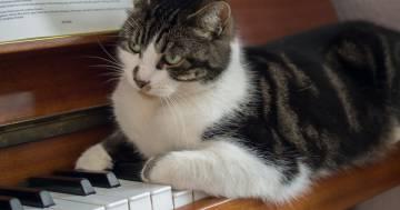 Un gruppo di ricercatori ha trovato la musica perfetta per far rilassare i gatti