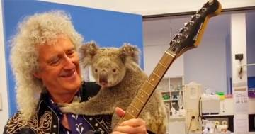 Brian May: in Australia suona in compagnia di un dolcissimo Koala