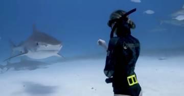 Il sub accarezza lo squalo tigre: l'incontro da brividi è avvenuto alle Bahamas