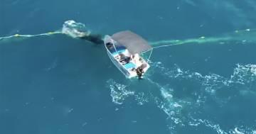 Multato per aver liberato un cucciolo di balena