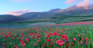 Un'esplosione di colori: l'incredibile fioritura a Castelluccio di Norcia