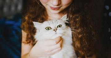 Chi ama i gatti è più intelligente degli altri: lo dice questo studio