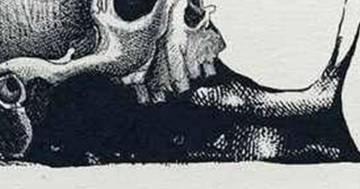Lumaca o cranio? Ecco il nuovo test visivo che svela un lato della personalità