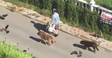 Una donna cammina per strada ed è seguita da diversi animali: ha qualche potere?