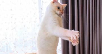 Il gatto ballerino, Chaco, è diventato una star di Instagram