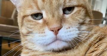 Questo è Marley, il gatto più scontroso del 2020