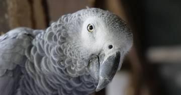 Uno zoo ha dovuto isolare cinque pappagalli perché dicevano troppe parolacce