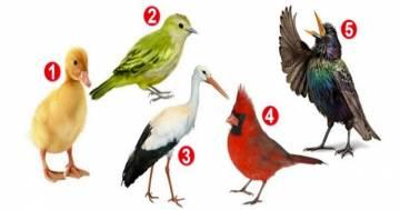 Scegli un uccellino e ti dirò chi sei: il test che rivela il nostro approccio alla vita