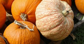 I bomboloni alla zucca: il dolcetto perfetto per Halloween
