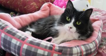 È possibile fare amicizia con i gatti, lo dice questo studio