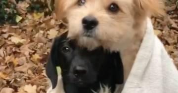 Un cagnolino avvolge in una coperta il suo piccolo amico: il tenero video