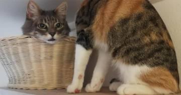Il gatto senza testa: la nuova illusione ottica conquista tutti