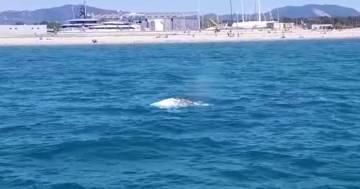 C'è una balena nel porto di Livorno: il video