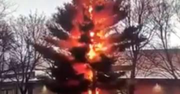 Il fulmine polverizza un albero: lo spettacolare video