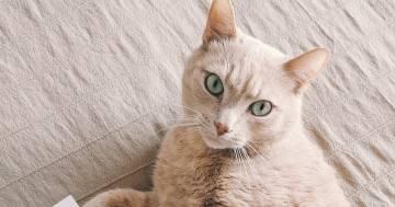 Il gatto si scatena sempre di notte ed il padrone lo riprende: il video è esilarante
