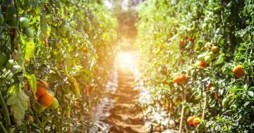 Il giardinaggio due volte alla settimana fa bene: la scienza conferma