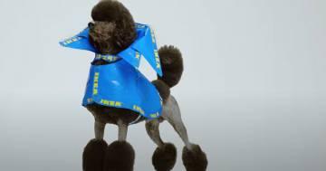 Ikea: le iconiche borse blu si trasformano in impermeabili per cani
