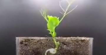 L'incantevole forza della natura in questo video in timelapse