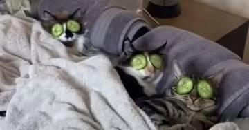 Avete mai visto dei gatti rilassarsi così in una spa? Il video è esilarante