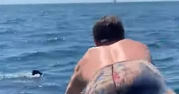 Si tuffa nell'oceano ma non si accorge dello squalo bianco: il video