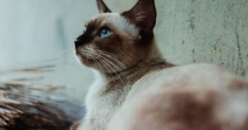 Wad: la gatta che ha 34 anni