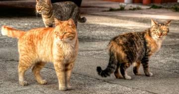 """La città di Chicago ha """"assunto"""" mille gatti randagi per combattere il problema dei topi"""