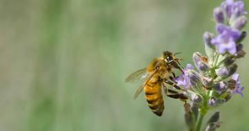 Giornata mondiale delle api: l'iniziativa di RDS a sostegno della biodiversità