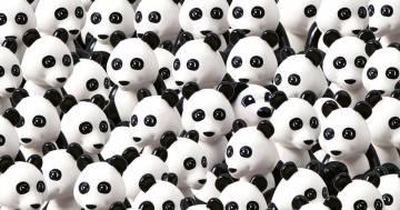 Il cane c'è e si è mimetizzato tra i panda. Sempre se lo trovate...