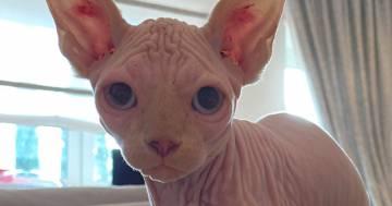 Nuovo arrivo in casa Totti-Blasi: Ilary presenta il gatto Alfio ai suoi follower di Instagram