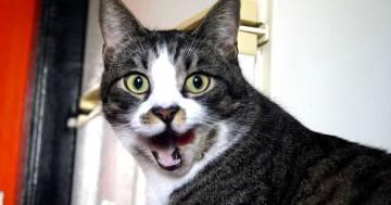 Gatti aggressivi e agitati? Può essere colpa del carattere dei loro proprietari