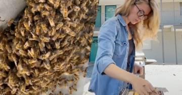Libera l'ombrellone dalle api a mani nude: il video diventa virale