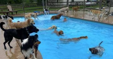 Questo asilo per cani ha una piscina a forma di osso costruita apposta per loro