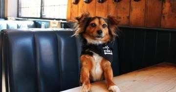 A Londra c'è un bar che prepara cocktail per cani