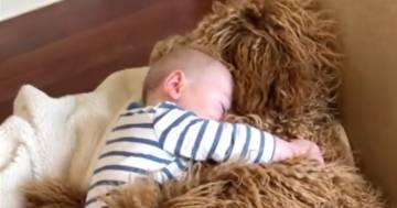 Il bimbo si addormenta abbracciando il suo cagnolone: le tenere immagini fanno il giro del web