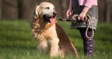 In Lazio ora è vietato legare i cani con la catena in casa o in giardino