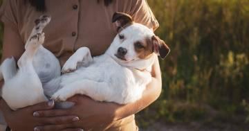 Gionata mondiale del cane: ecco cinque errori da evitare quando si adotta un cucciolo