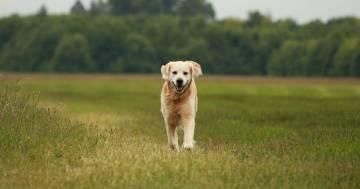 Giornata mondiale del cane: cinque consigli per festeggiarla come si deve