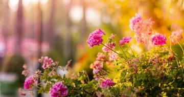 Le piante da coltivare a settembre per uno splendido giardino d'autunno fiorito