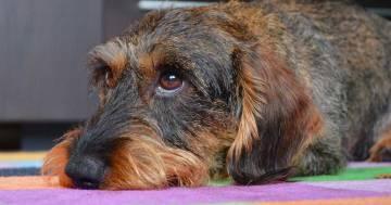Congedo pagato per superare la morte del cane: in Colombia due giorni di ferie per legge