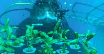 Nemo's Garden: il primo orto subacqueo del mondo è italiano