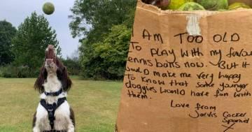 Dog-sitter trova uno scatolone pieno di palline da tennis e scopre una storia molto commovente