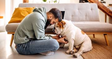 I cani reagiscono come i bambini alla voce di un famigliare