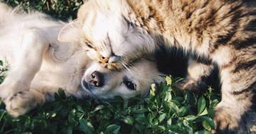 Cane e gatto si contendono il divano: chi la spunterà?